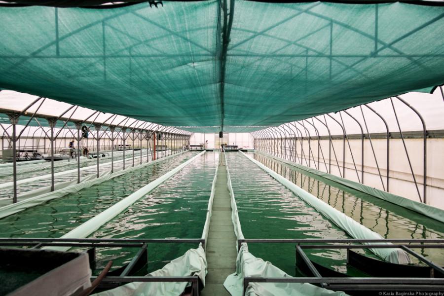 Full Scale Algae Farm